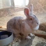 Kaninchen Gracy